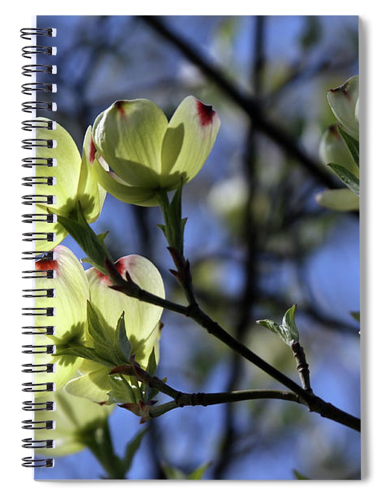 Dogwood Tree Spiral Notebook featuring the photograph Dogwood in Sunlight by John Lautermilch