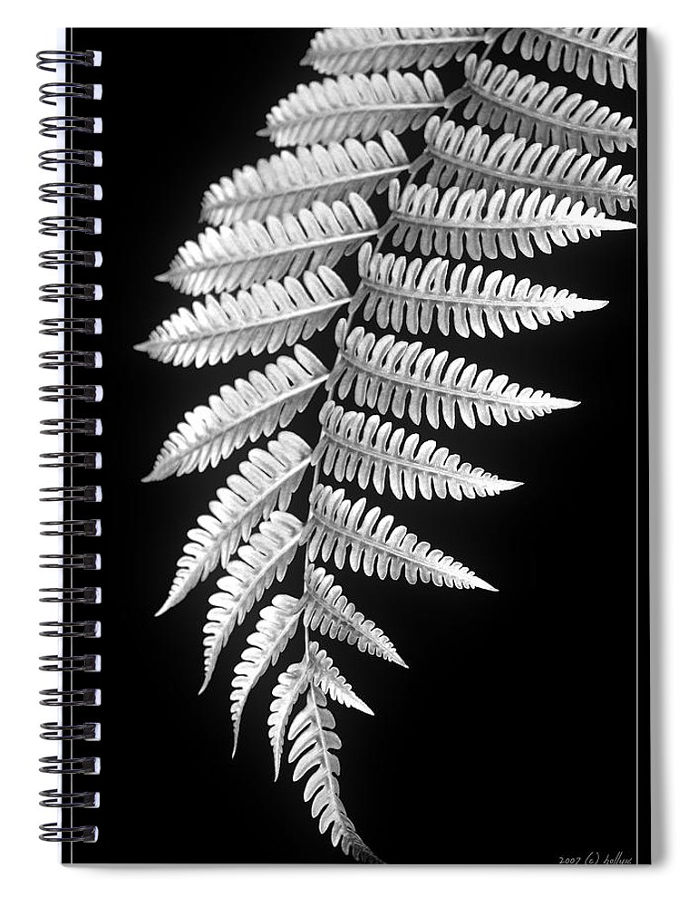 Australia; Floral Spiral Notebook featuring the photograph Fern Dance by Holly Kempe