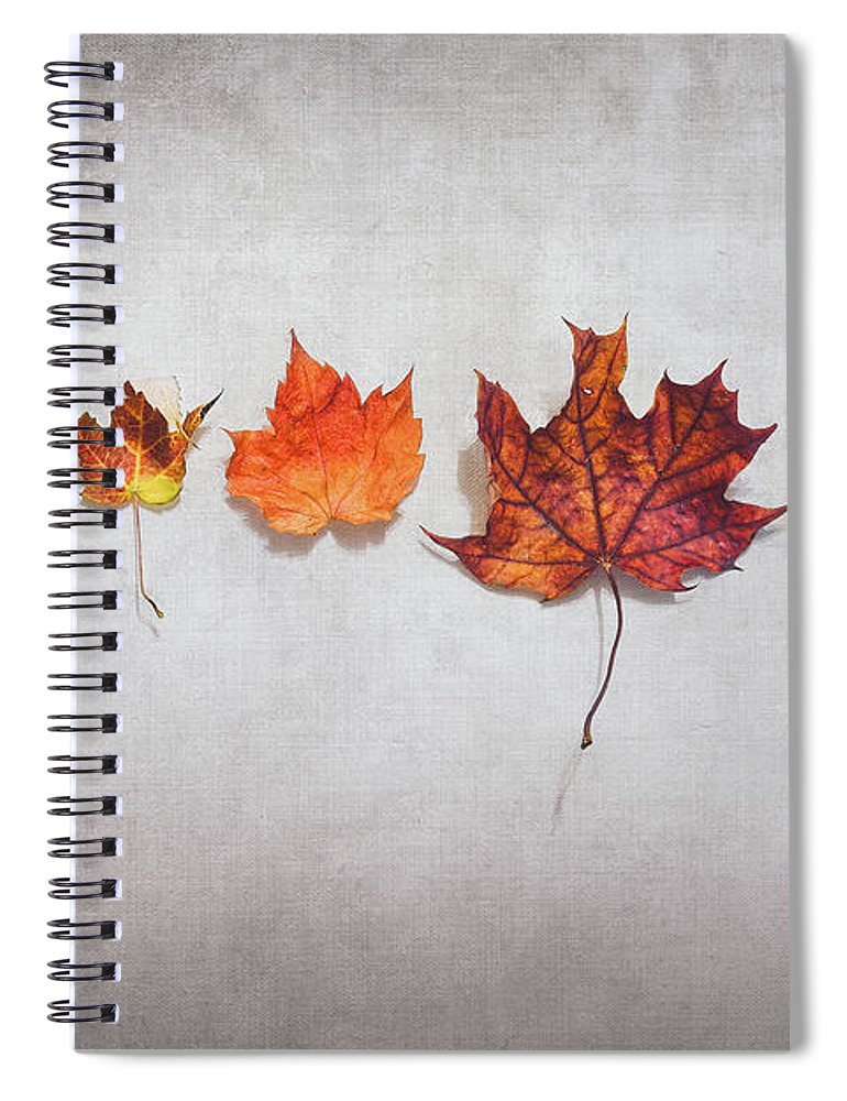 Autumn Spiral Notebook featuring the photograph Five Autumn Leaves by Scott Norris