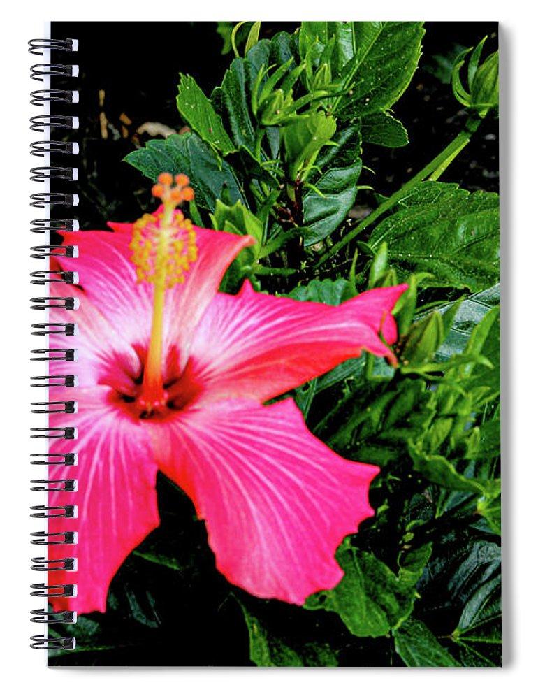 Flower Spiral Notebook featuring the digital art La cayena by Daniel Cornell