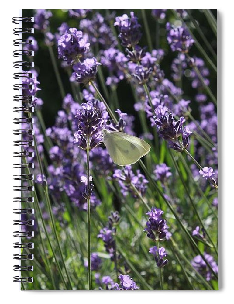 Lavender Spiral Notebook featuring the photograph Lavender by Vicki Cridland