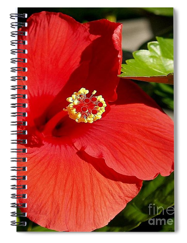 Fine Art Photography Spiral Notebook featuring the photograph Leila by Patricia Griffin Brett