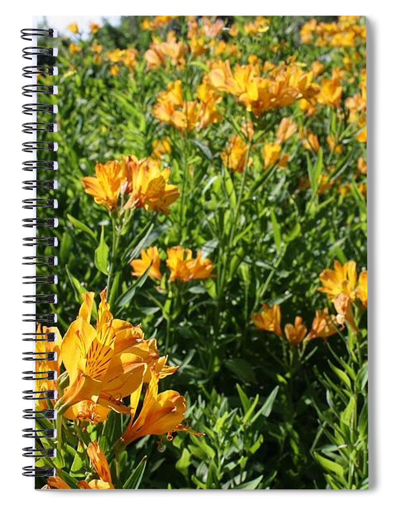 Lily Of The Incas Spiral Notebook featuring the photograph Lily of the Incas by Vicki Cridland