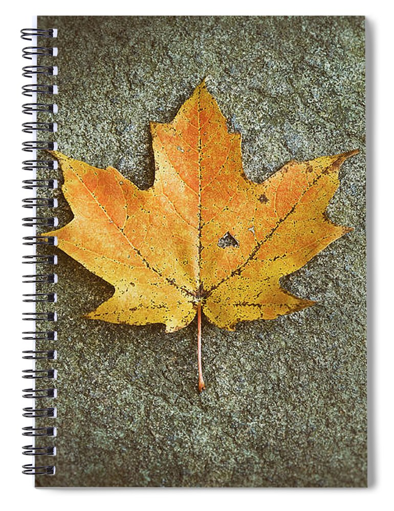 Leaf Spiral Notebook featuring the photograph Maple Leaf on Stone by Scott Norris