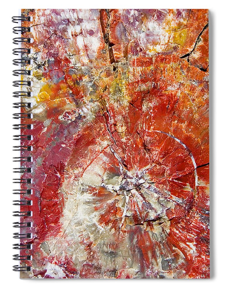 Petrified Wood Stone Texture Abstract Color Skip Hunt Spiral Notebook featuring the photograph Painted Desert Wood 1 by Skip Hunt