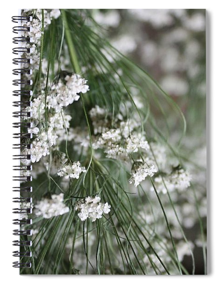 Queen Anne's Lace Spiral Notebook featuring the photograph Queen Anne's Lace by Vicki Cridland