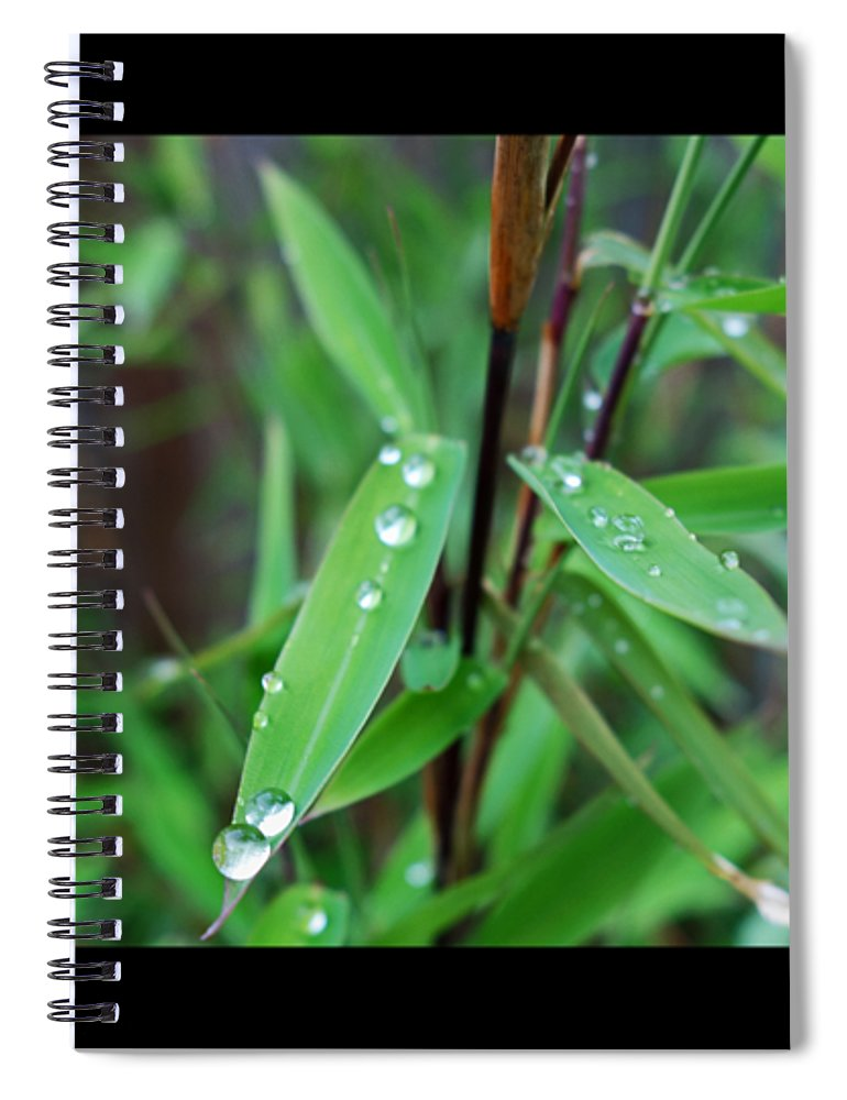 Rain Drops Spiral Notebook featuring the painting Rain On Bamboo by Charles Stuart