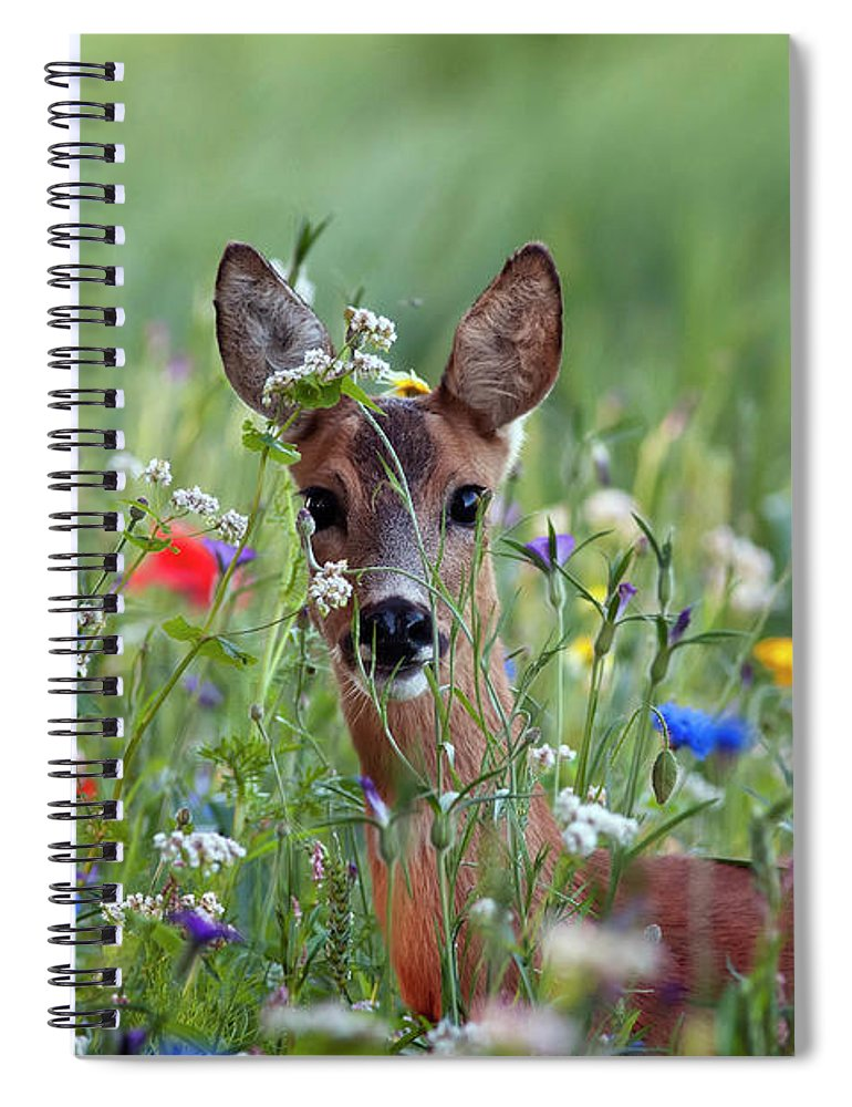 00540443 Spiral Notebook featuring the photograph Roe Deer Amid Wildflowers by Ronald Stiefelhagen