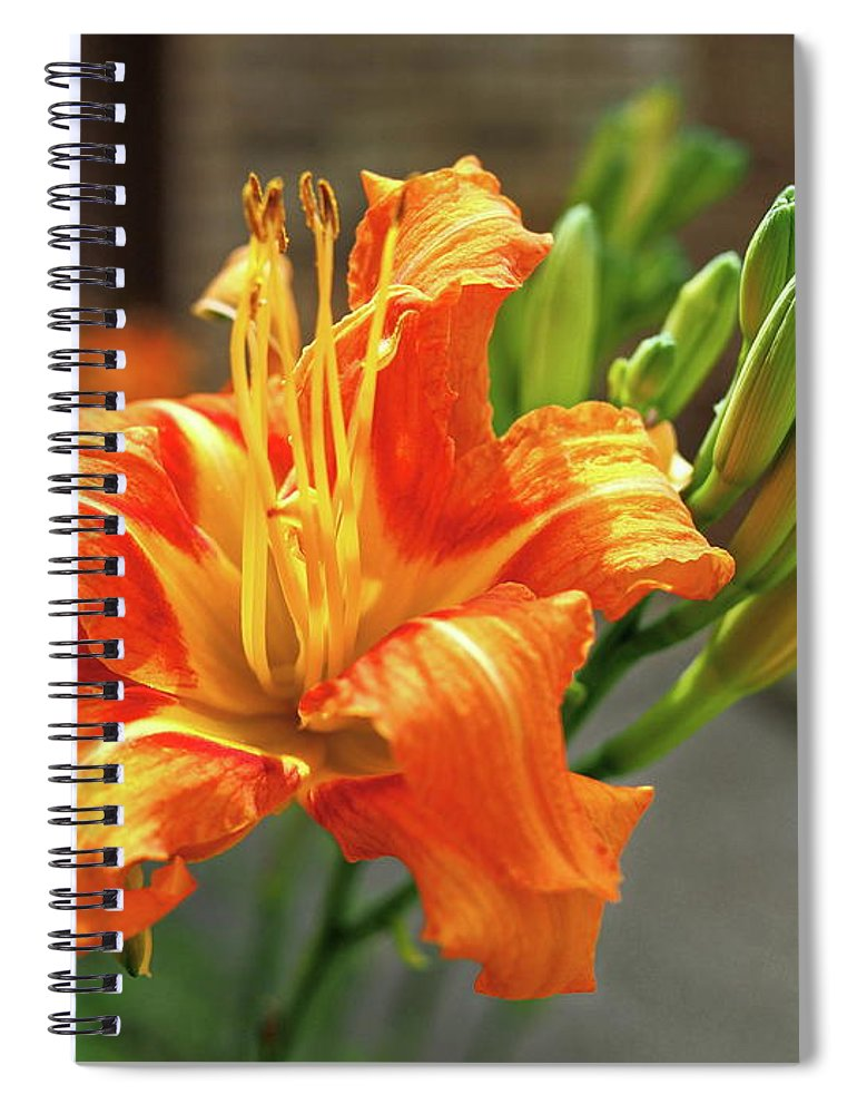 Orange Spiral Notebook featuring the photograph Spring Flower 14 by C Winslow Shafer