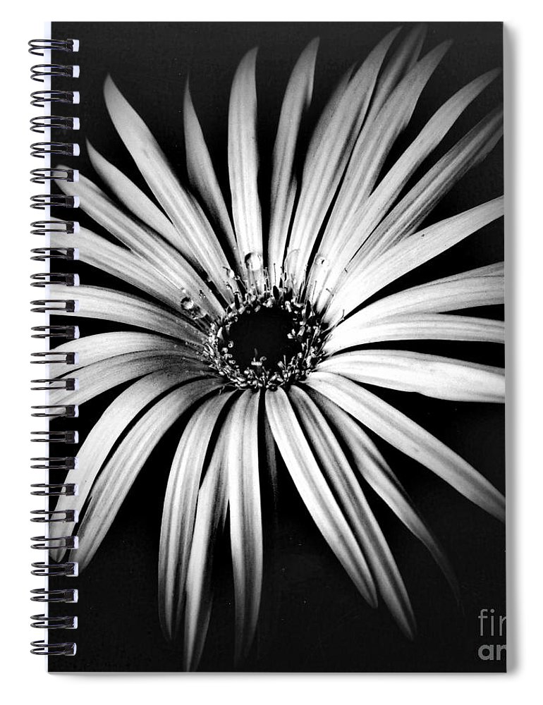 Photo Spiral Notebook featuring the photograph Star by Alex Caminker