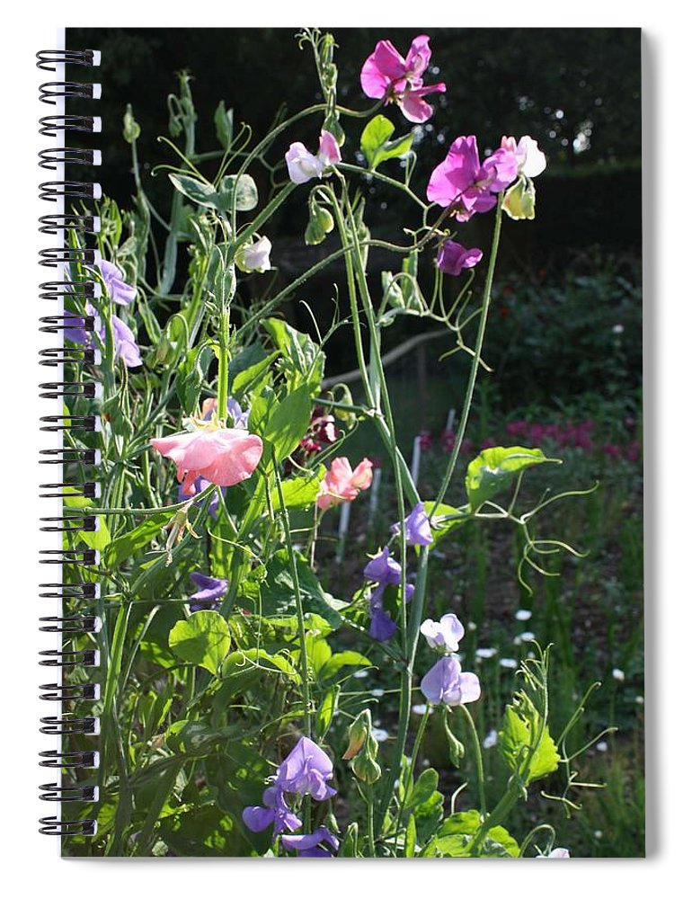Sweet Peas Spiral Notebook featuring the photograph Sweet Pea Climbers by Vicki Cridland