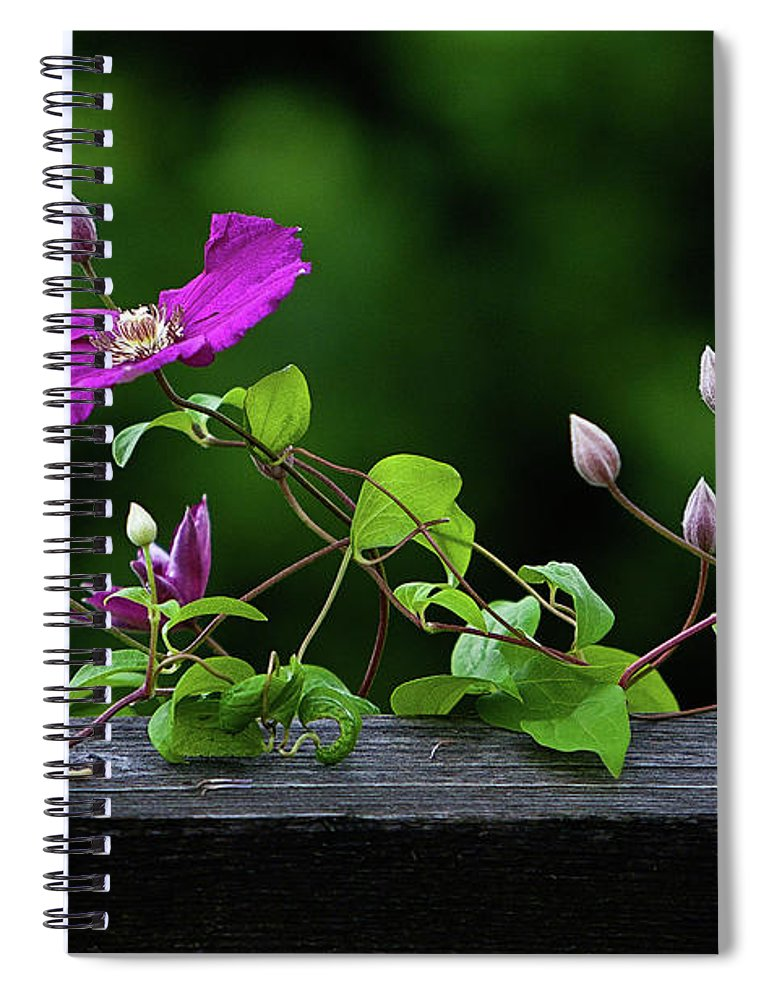 Photography Spiral Notebook featuring the photograph Vine, Flowers and Buds by Linda Lee Hall
