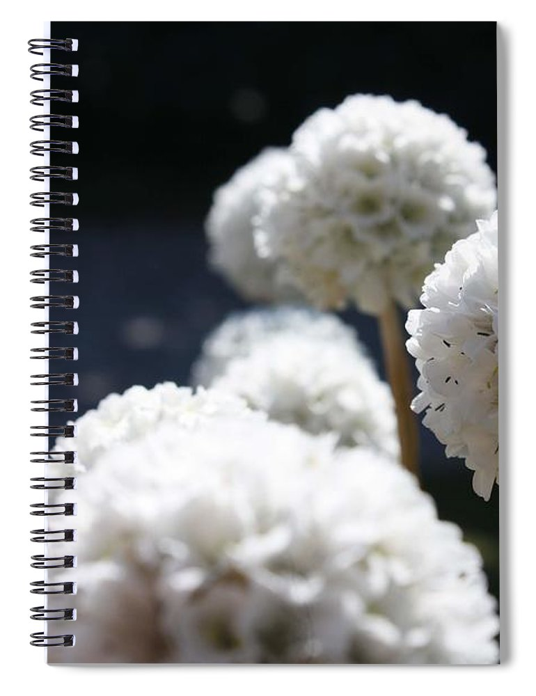 Aliums Spiral Notebook featuring the photograph White Aliums by Vicki Cridland