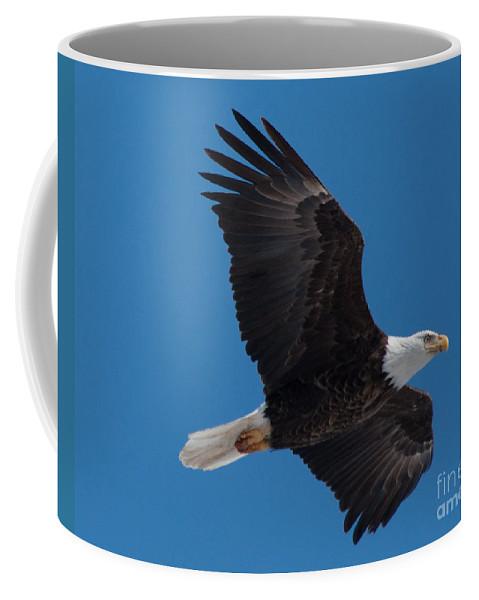 Bald Eagle Coffee Mug featuring the photograph Bald Eagle In Flight 6 by Ronald Grogan