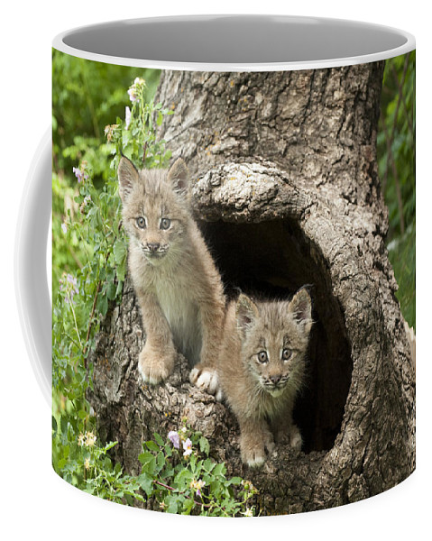 Lynx Coffee Mug featuring the photograph Double Trouble by Sandra Bronstein