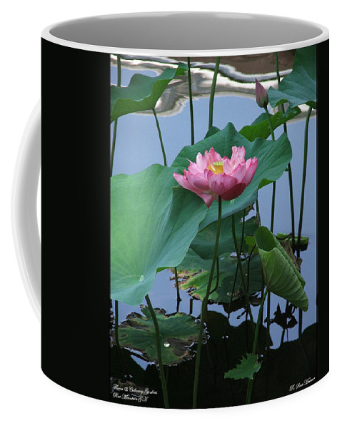 Lotus Coffee Mug featuring the photograph Lotus Flower At Calloway by Robert Meanor