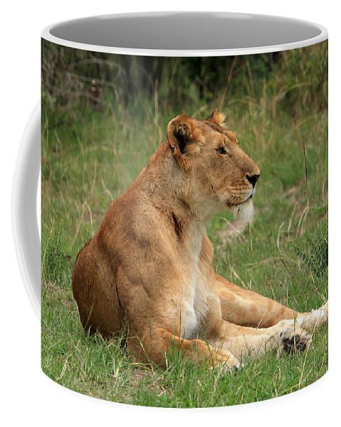 Lion Coffee Mug featuring the photograph Masai Mara Lioness by Aidan Moran