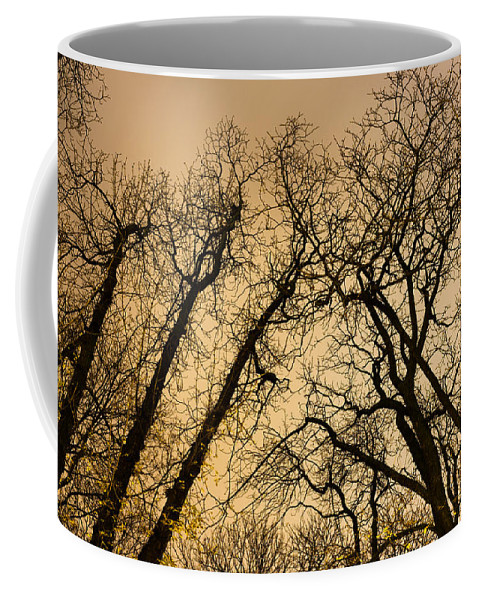 Quarrel Coffee Mug featuring the photograph Quarrel by Tgchan
