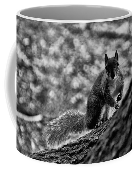 Squirrel Coffee Mug featuring the photograph Squirrel In The Park V3 by Douglas Barnard