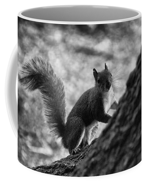 Squirrel Coffee Mug featuring the photograph Squirrel In The Park V4 by Douglas Barnard