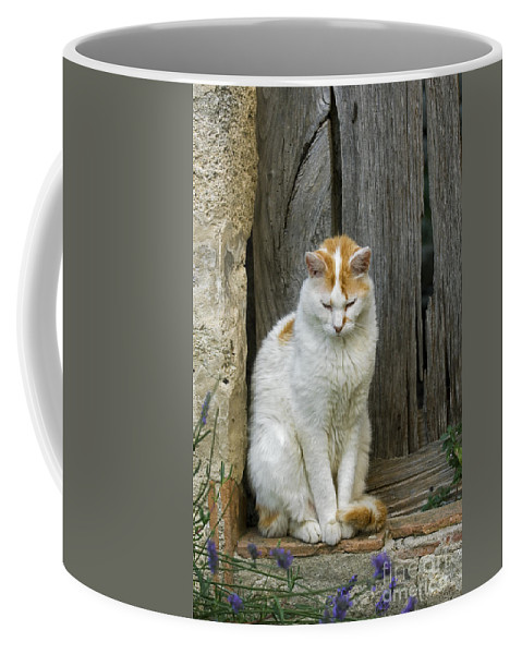 White Coffee Mug featuring the photograph 080801p076 by Arterra Picture Library