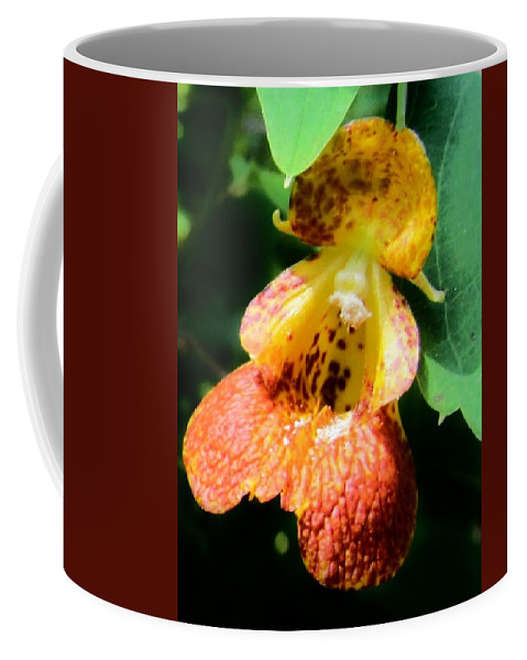 Spotted Jewelweed Coffee Mug featuring the photograph Spotted Jewelweed by Eric Noa