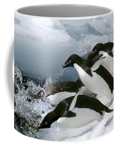 Adelie Penguin Coffee Mug featuring the photograph Adelie Penguins by Art Wolfe