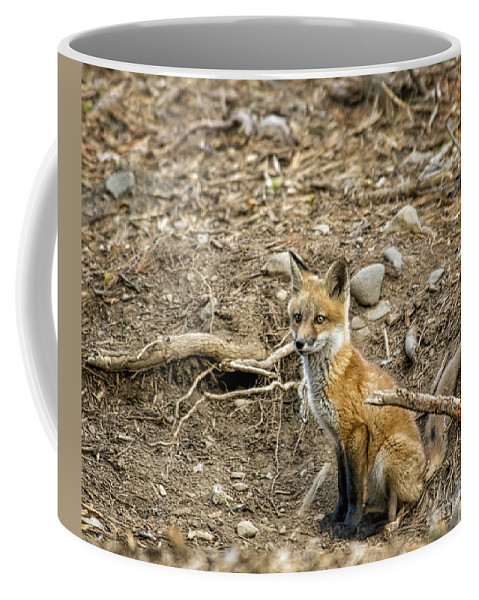 Foxes Coffee Mug featuring the photograph Alert by Claudia Kuhn