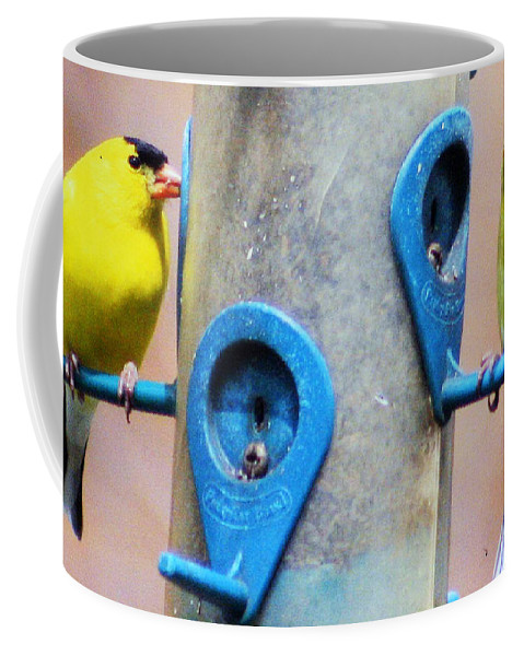 Male And Female American Goldfinch Coffee Mug featuring the photograph American Goldfinch by Kay Novy