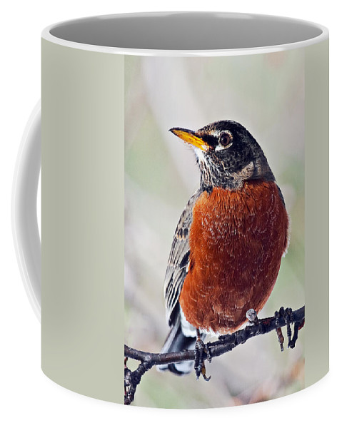 American Coffee Mug featuring the photograph American Robin by Marcia Colelli