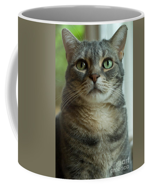 Alert Coffee Mug featuring the photograph American Shorthair Cat Profile by Amy Cicconi