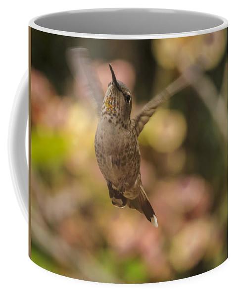 Annas Hummingbird Coffee Mug featuring the photograph Anna's Hummingbird by Mike Herdering