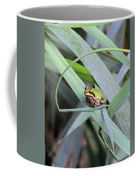 Frog Coffee Mug featuring the photograph At The Crossroads by I'ina Van Lawick