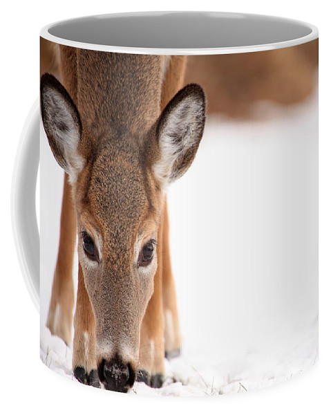 Deer Coffee Mug featuring the photograph Attention by Karol Livote
