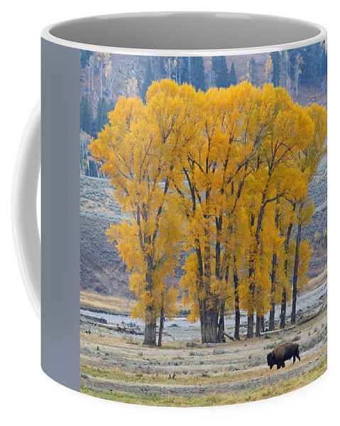 American Bison Coffee Mug featuring the photograph Autumn In The Lamar by Max Waugh