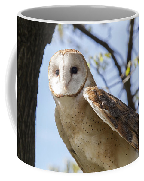 Alba Coffee Mug featuring the photograph Barn Owl by Jack R Perry