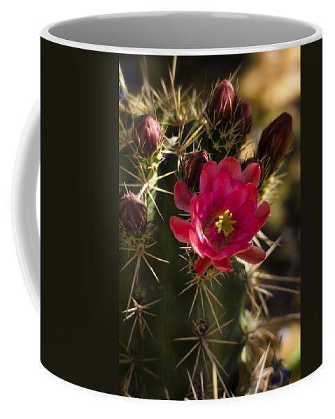 Arizona Coffee Mug featuring the photograph Beauty In The Desert by Saija Lehtonen