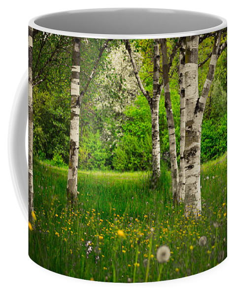 Birch Coffee Mug featuring the photograph Birches by Hannes Cmarits