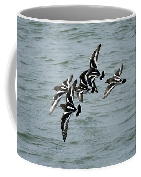 Turnstones Coffee Mug featuring the photograph Black Turnstones by Betty Depee