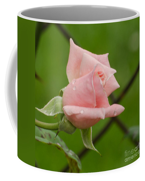 Rose Coffee Mug featuring the photograph Budding by Donna Brown