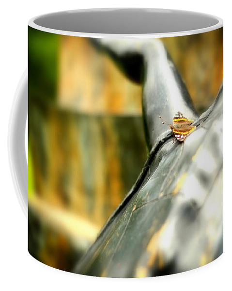 Butterfly Coffee Mug featuring the photograph Butterfly by Boris Mordukhayev