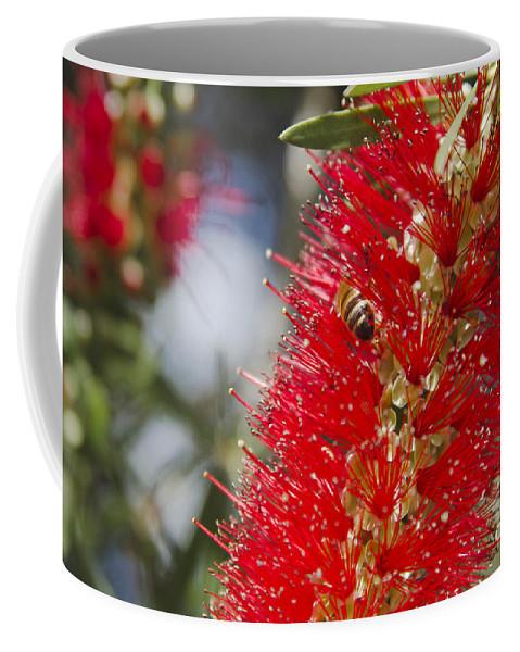 Coffee Mug featuring the photograph Callistemon Citrinus - Crimson Bottlebrush by Sharon Mau