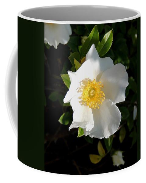 Digital Photography Coffee Mug featuring the photograph Cherokee Rose by Kim Pate