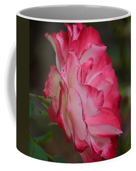 Cherry Cream Rose Coffee Mug featuring the photograph Cherry Cream Rose by Maria Urso