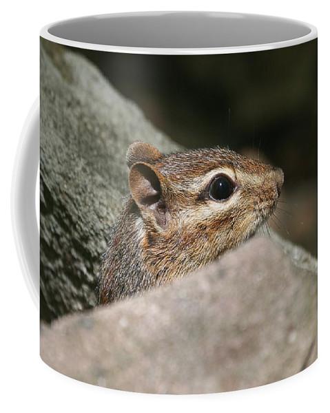 Chipmunk Coffee Mug featuring the photograph Chipmunk by Ken Keener