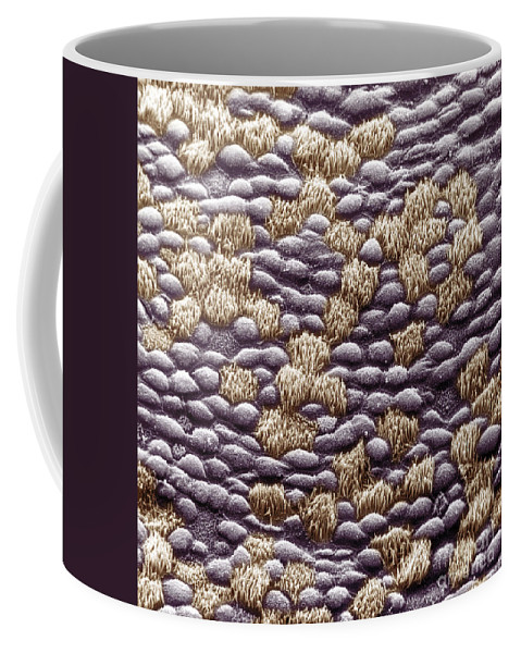 Tissue Coffee Mug featuring the photograph Ciliated Cells In Trachea, Sem by David M. Phillips