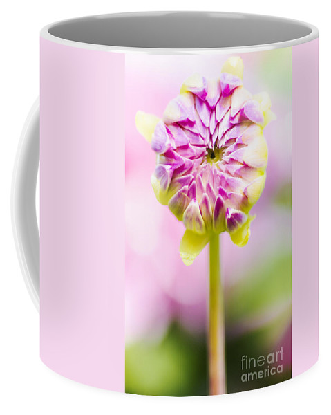 Dahlia Coffee Mug featuring the photograph Closed Pink Baby Dahlia Flower. Spring Blossom by Jorgo Photography - Wall Art Gallery
