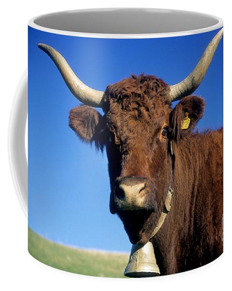 Cow Coffee Mug featuring the photograph Cow Salers by Bernard Jaubert