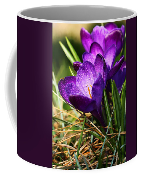 Crocus Coffee Mug featuring the photograph Crocus And Drops by Heike Hultsch