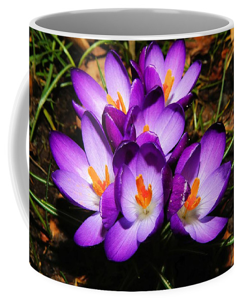 Flower Coffee Mug featuring the photograph Crocus Flower by FL collection